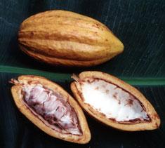 اشجار نستهلك ثمارها ولا نعرف شكلها 40_203281_1262031693