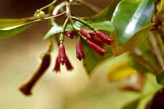 اشجار نستهلك ثمارها ولا نعرف شكلها 40_203281_1262031783