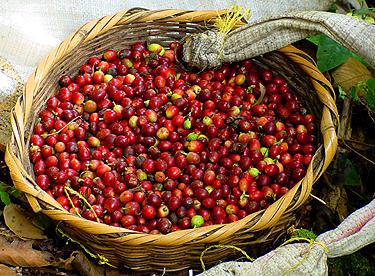 اشجار نستهلك ثمارها ولا نعرف شكلها 40_203281_1262031823