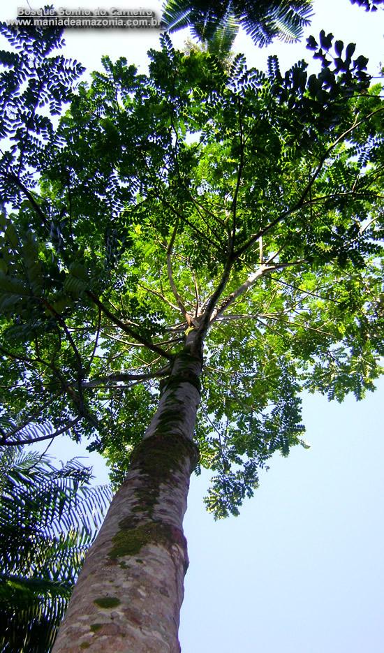 Árvores - Nossos baixos antes de tomar forma Marupa