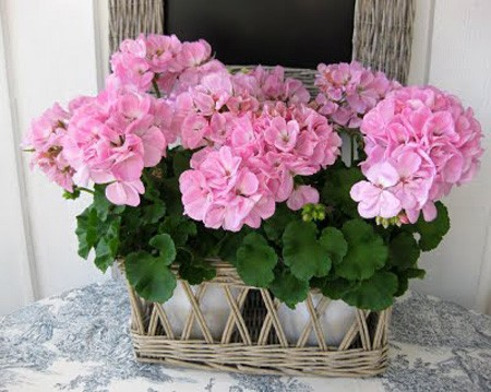 VAMOS DE PASEO - Página 5 Simple-y-hermoso-flores