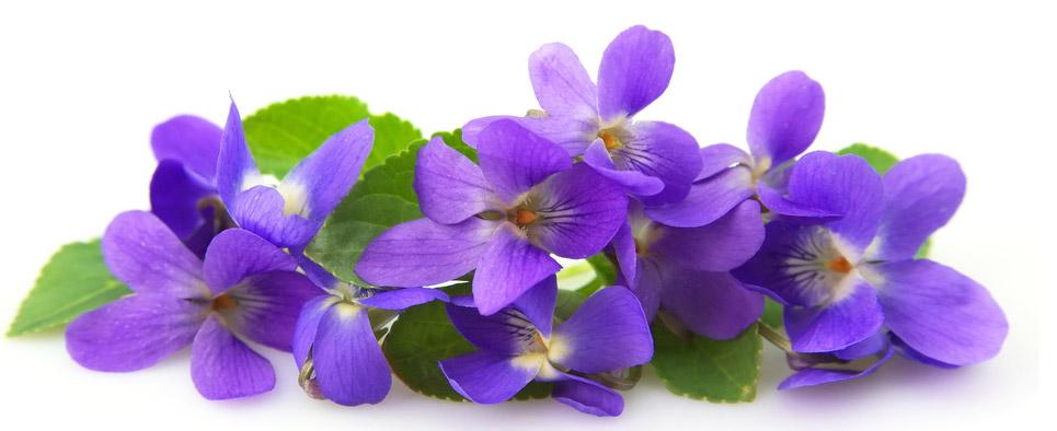 Violette 's Day  Violette4-1