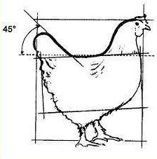 Poule Marans - les standards Poule-net