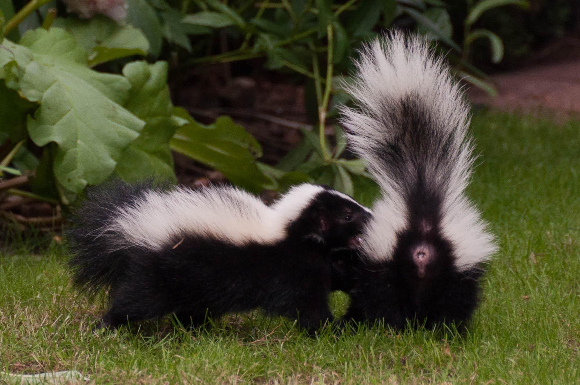 un animal à découvrir , blucat (5août)trouvé par ajonc 20110629-16h17-dsc_9726