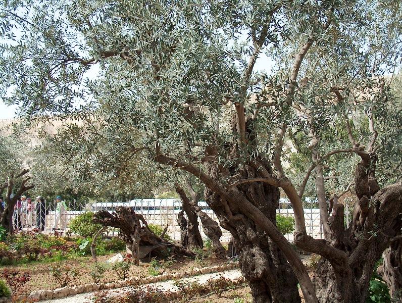 Saib duab teb chaws Yesxus yug los Gethsemani
