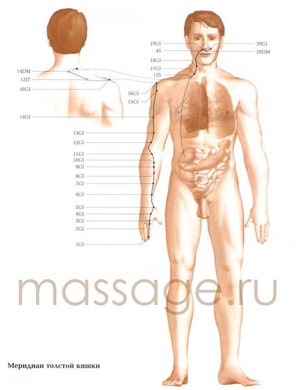 Атлас точек акупунктуры  L_intestine