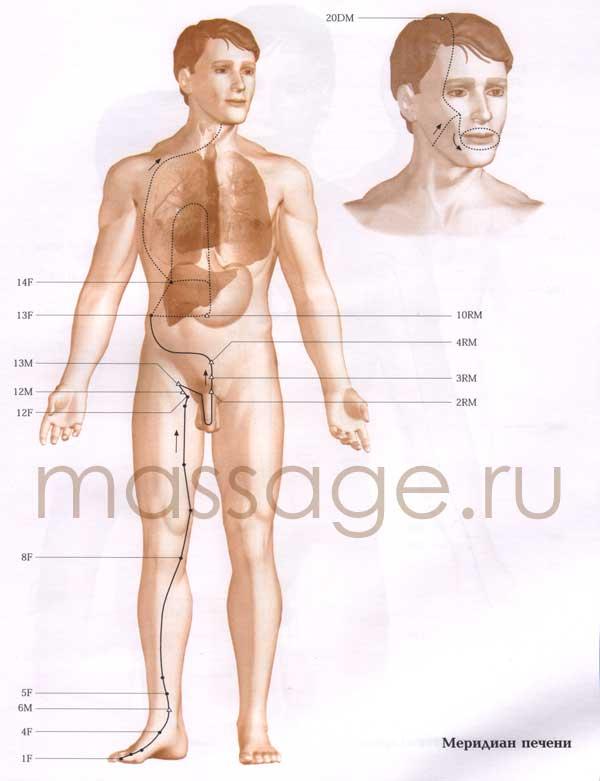 Атлас точек акупунктуры  Liver