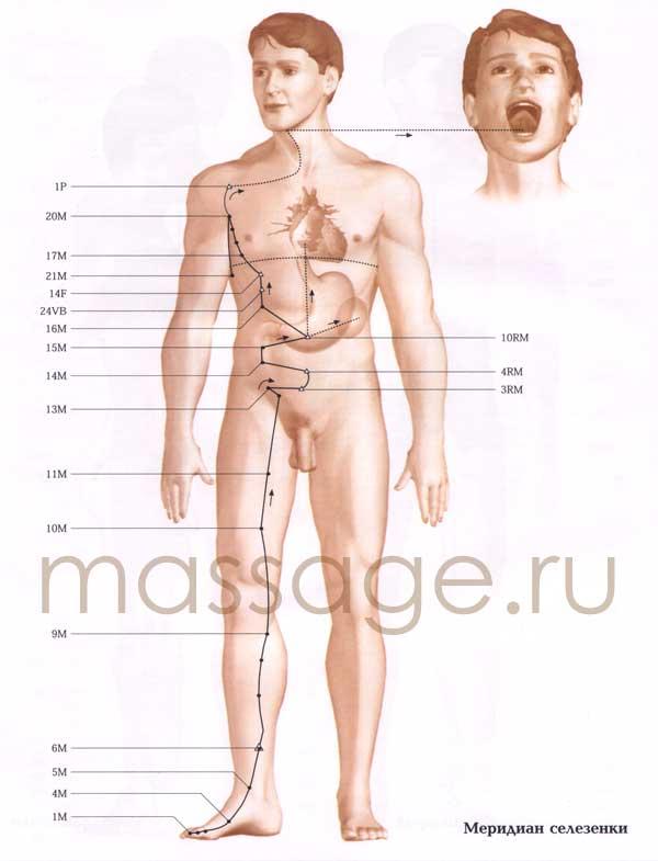 Атлас точек акупунктуры  Spleen
