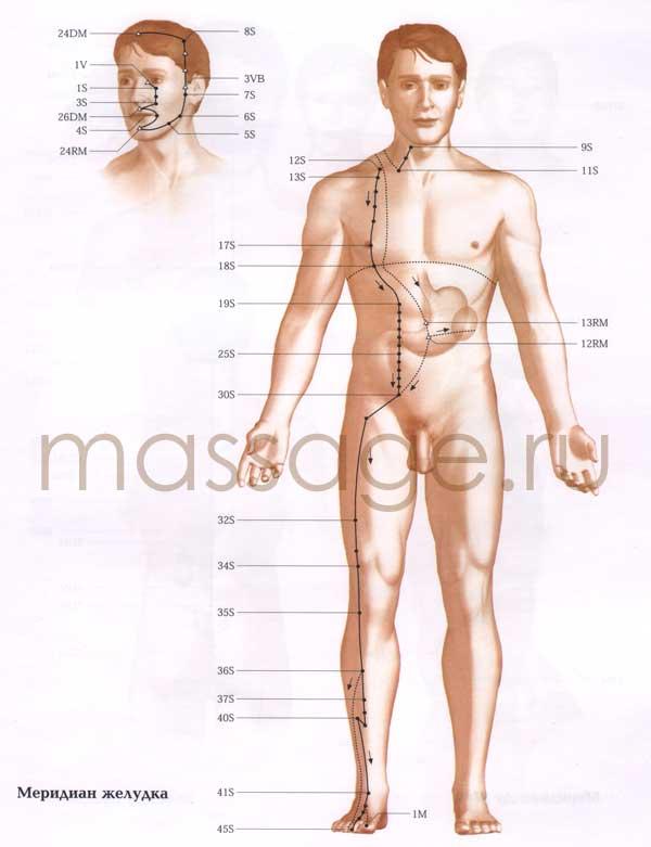 Атлас точек акупунктуры  Stomach