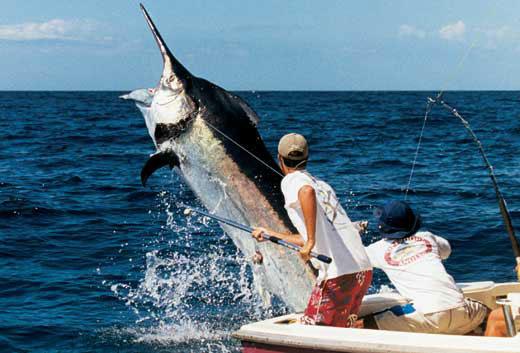 La Pesca Marlin por José Manuel López Pinto - Actualizado al 2 de Enero, 2013 BlackMarlinRelease