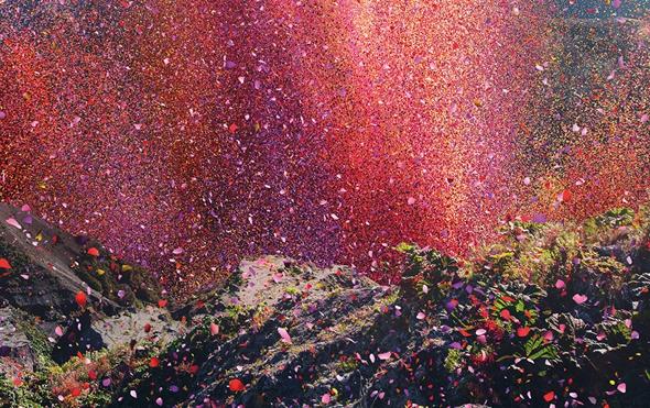 Qu'est - ce   - ajonc -14 août trouvé par Jovany Sony-4k-petale-fleurs-couleurs-costa-rica-pub-5
