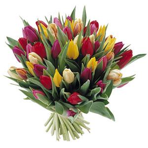 Onomastici e compleanni - - Pagina 4 B17-Bouquet-tulipani-colorati