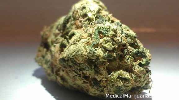 LEARN WHICH STRAIN OF MARIJUANA TREATS WHICH MEDICAL CONDITION HERE Blue%20diesel%202-578x325