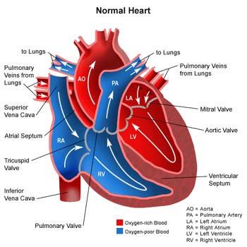 BU UREK SENSIZ NECE YASHASIN... Heart-diseases1