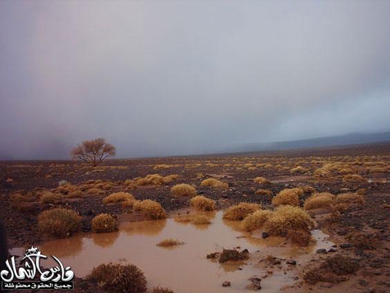 صور للأمطار والسيول على منطقة تبـــوك ... السبت 7 /12 / 1426 هـ  Mk9543_rt15