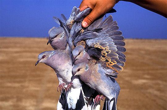 طيور وحيوانات بريه Mkdeleted_bok3