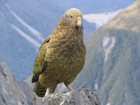 معلومات عجيبة عن الطيور..الجزء الاول Mk42658_444