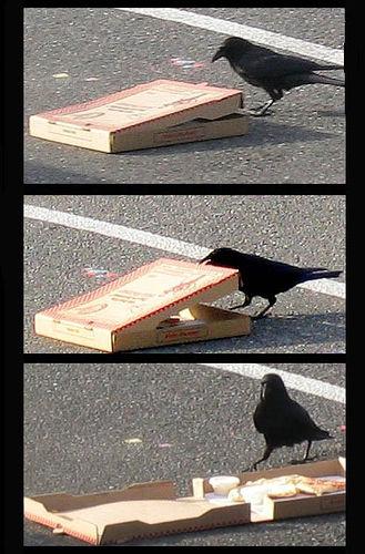 معلومات عجيبة عن الطيور..الجزء الاول Mk42658_555