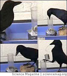معلومات عجيبة عن الطيور..الجزء الاول Mk42658_666