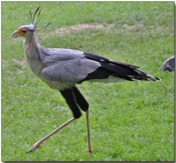 معلومات عجيبة عن الطيور..الجزء الاول Mk42658_cantjump