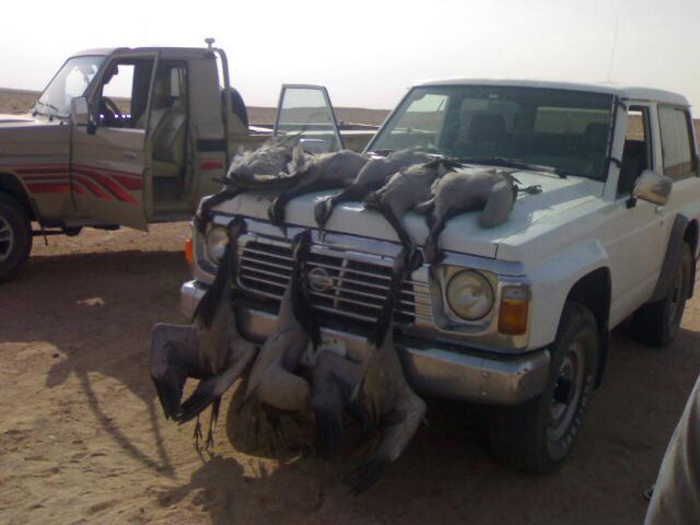 صيد طيور الوز .. Mk18662_yxiedd7pyz