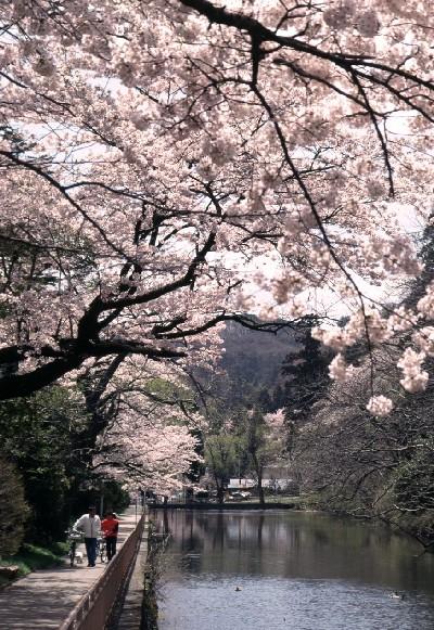 صور من اليابان الرائعة Mk61903_llllllllllllllllllllll