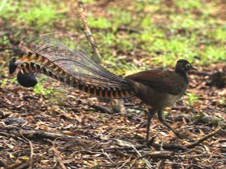 معلومات عجيبة عن الطيور..الجزء الاول Mk42658_101
