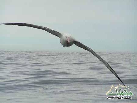معلومات عجيبة عن الطيور..الجزء الثاني Mk42658_202