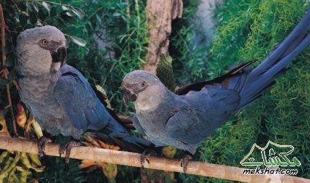 معلومات عجيبة عن الطيور..الجزء الثاني Mk42658_204
