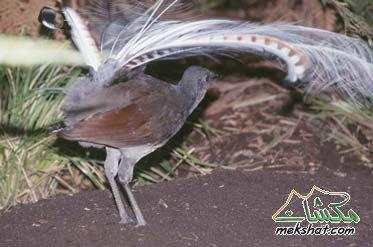 معلومات عجيبة عن الطيور..الجزء الثالث Mk42658_301