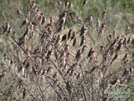 معلومات عجيبة عن الطيور..الجزء الثالث Mk42658_3071