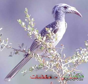 معلومات عجيبة عن الطيور..الجزء الثالث Mk42658_308
