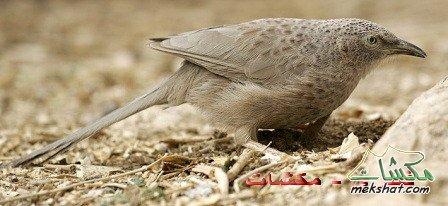 معلومات عجيبة عن الطيور..الجزء الثالث Mk42658_44