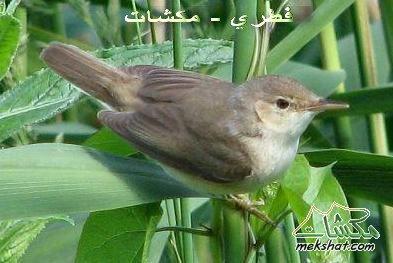 معلومات عجيبة عن الطيور..الجزء الثالث Mk42658_77