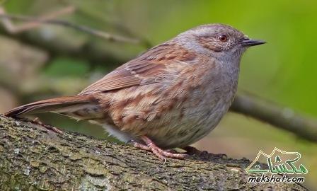 معلومات عجيبة عن الطيور..الجزء الثالث Mk42658_88