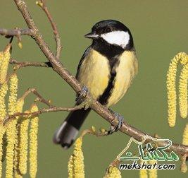 معلومات عجيبة عن الطيور..الجزء الثالث Mk42658_99