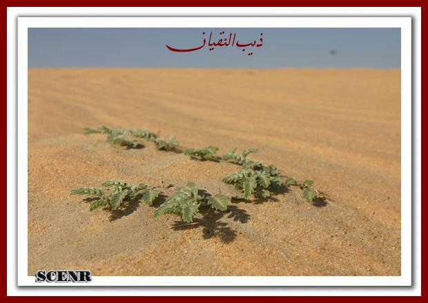 موسوعة شاملة عن المحميات الطبيعية - حصريا على منتدى واحة الإسلام - صفحة 2 Mk73212_areg%20(1)_620x440