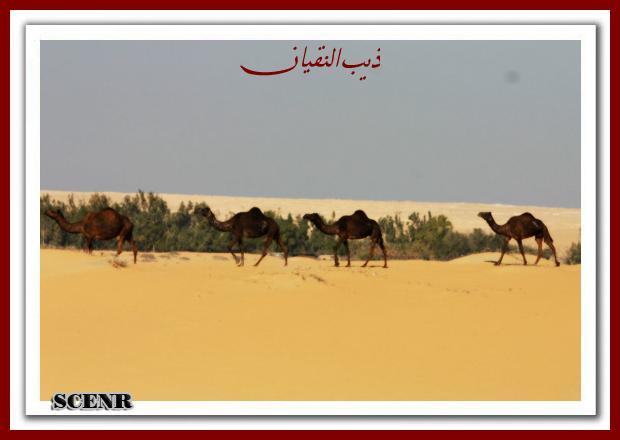 موسوعة شاملة عن المحميات الطبيعية - حصريا على منتدى واحة الإسلام - صفحة 2 Mk73212_areg_620x440