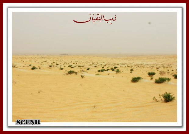 موسوعة شاملة عن المحميات الطبيعية - حصريا على منتدى واحة الإسلام - صفحة 2 Mk73212_asherg%20(1)_620x440