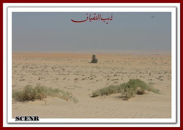 موسوعة شاملة عن المحميات الطبيعية - حصريا على منتدى واحة الإسلام - صفحة 2 Mk73212_asherg_620x440