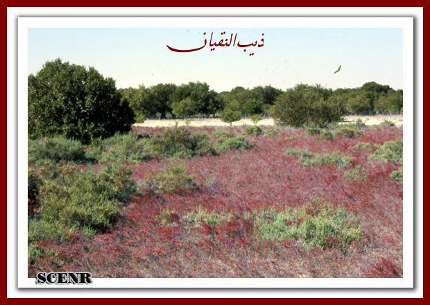موسوعة شاملة عن المحميات الطبيعية - حصريا على منتدى واحة الإسلام - صفحة 2 Mk73212_dekera%20(2)_620x440