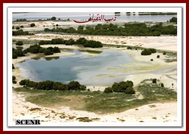 موسوعة شاملة عن المحميات الطبيعية - حصريا على منتدى واحة الإسلام - صفحة 2 Mk73212_dekera_620x440
