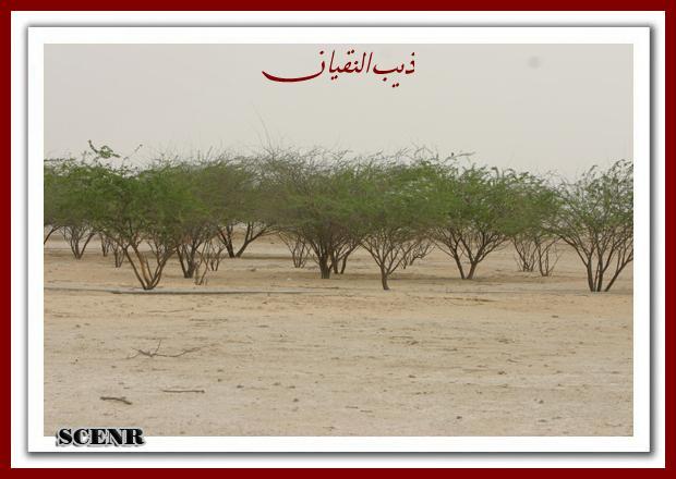 موسوعة شاملة عن المحميات الطبيعية - حصريا على منتدى واحة الإسلام - صفحة 2 Mk73212_mseheh%20(1)_620x440