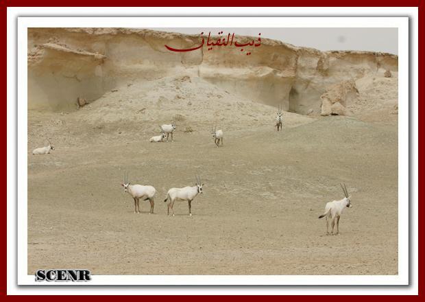موسوعة شاملة عن المحميات الطبيعية - حصريا على منتدى واحة الإسلام - صفحة 2 Mk73212_mseheh%20(2)_620x440