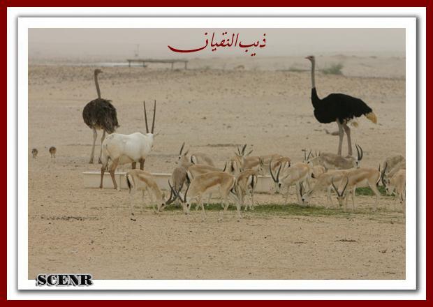 موسوعة شاملة عن المحميات الطبيعية - حصريا على منتدى واحة الإسلام - صفحة 2 Mk73212_mseheh_620x440