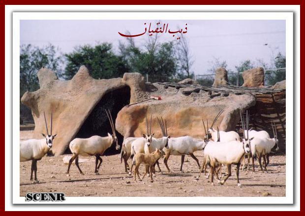 موسوعة شاملة عن المحميات الطبيعية - حصريا على منتدى واحة الإسلام - صفحة 2 Mk73212_shahnea%20(1)_620x440