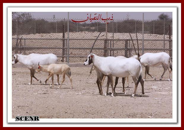 موسوعة شاملة عن المحميات الطبيعية - حصريا على منتدى واحة الإسلام - صفحة 2 Mk73212_shahnea_620x440