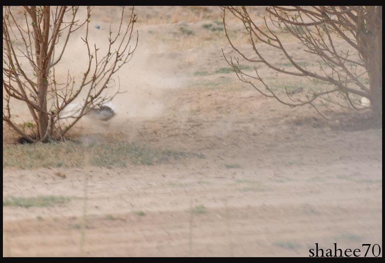 احتراف صيد وتصوير القمري Mk101994_44x