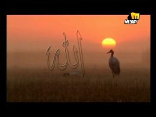 اسلاميات من حربي الغرابلي من احلي شباب 20 Ay_Fanous