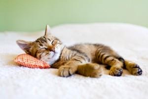 Zrovna v noci bdiete? Napíšte! - Stránka 3 Cat-w-pillow-web-300x200